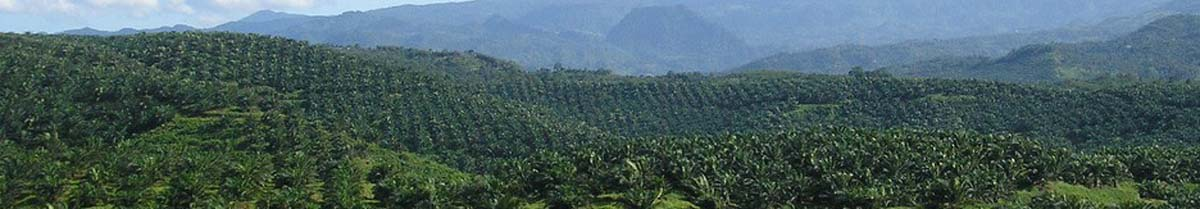 Oil palm plantation, Cigudeg